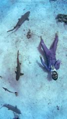 Dive+潜水员qianshuidae
