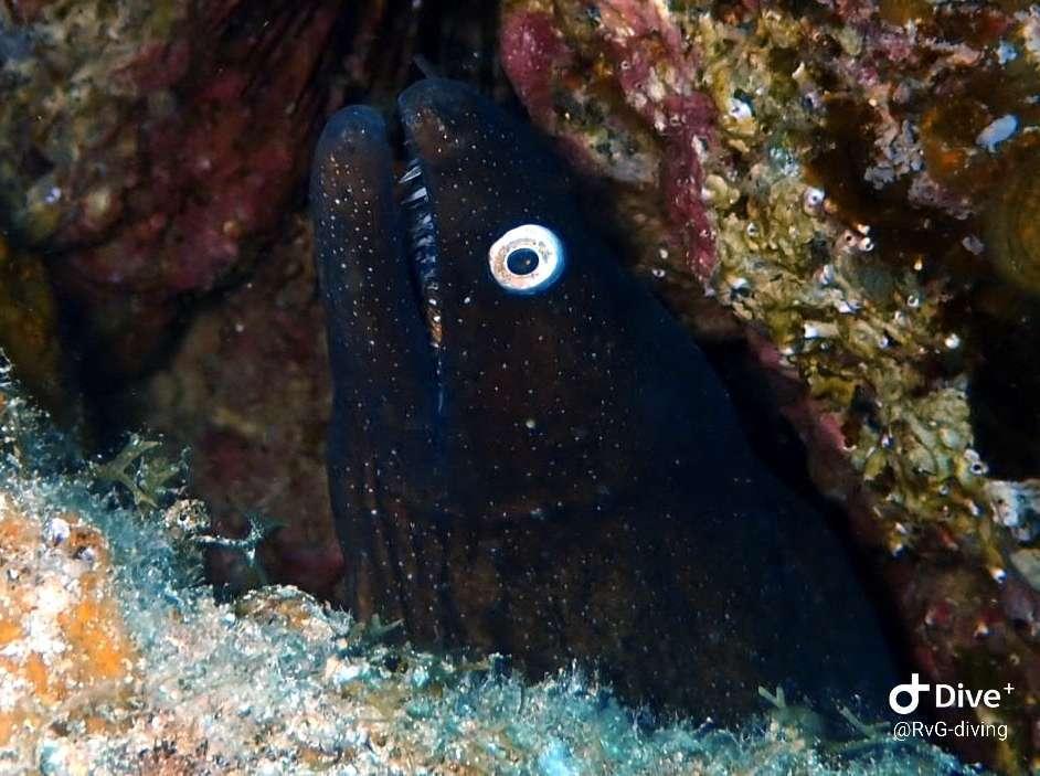 Dive+潜水员rinusopreis的精彩瞬间