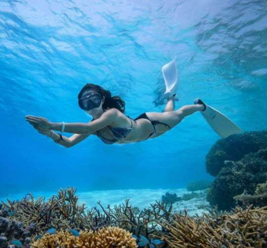Dive+热门主题:#帕劳欢乐潜