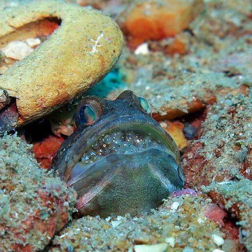 Dive+精彩瞬间,一起体验在Chumphon的潜水