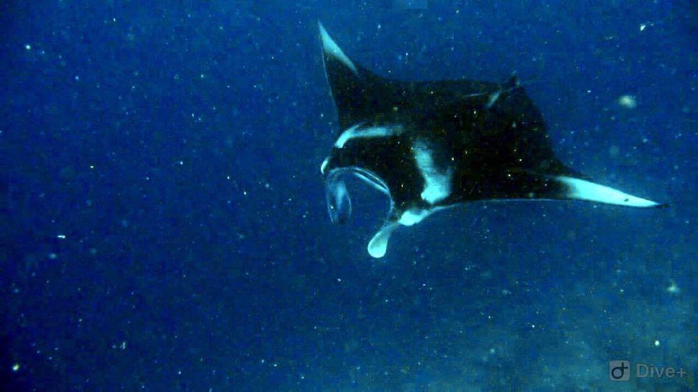 Dive+潜水员LHggXia46的精彩瞬间