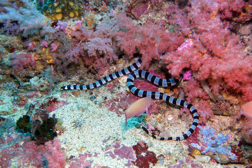 Dive+潜水员ginakwan的精彩瞬间