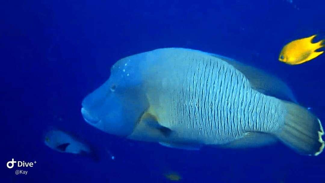 Dive+潜水员kayhalim的精彩瞬间
