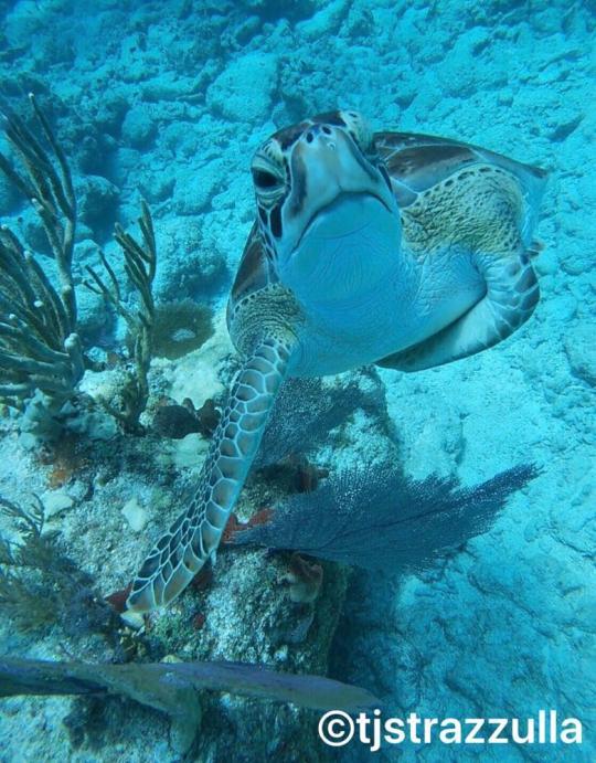 Dive+精彩瞬间,一起体验在Florida的潜水