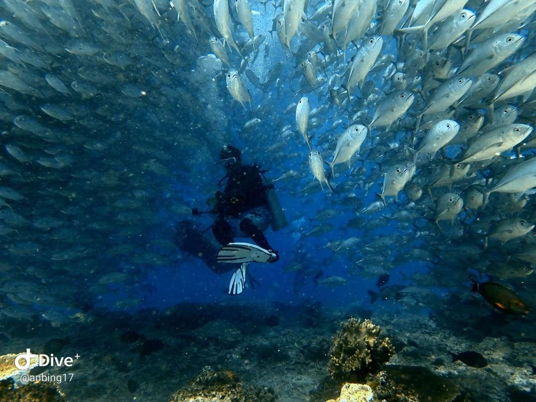 Dive+潜水员anbing17的精彩瞬间