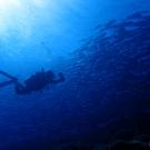 Dive+潜水员Stevenwoo