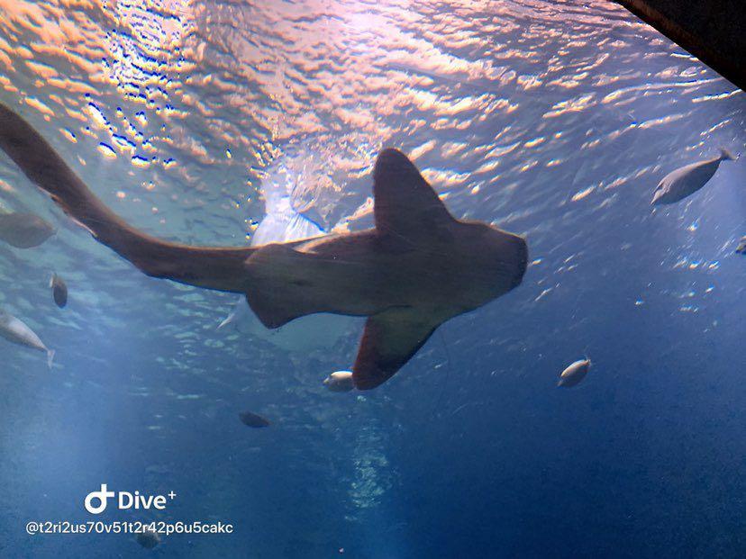 Dive+潜水员t2ri2us70v51t2r42p6u5cakc的精彩瞬间