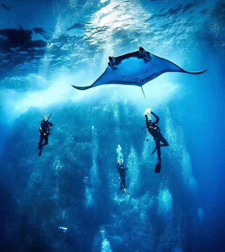 Dive+潜水员Elena628的精彩瞬间