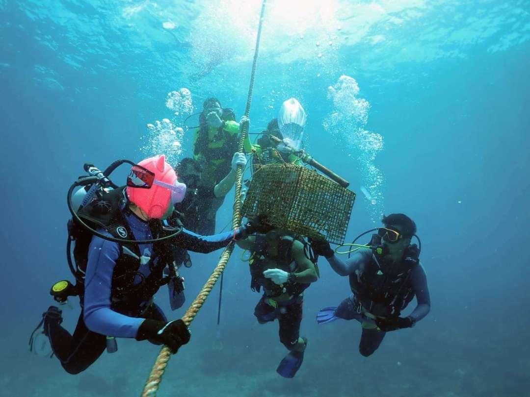 Dive+潜水员pookpik的精彩瞬间