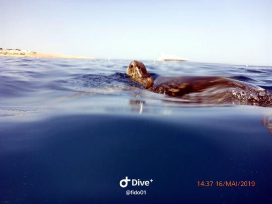 Dive+精彩瞬间