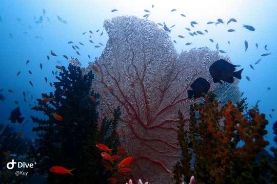 Dive+精彩瞬间,一起体验在Aceh的潜水